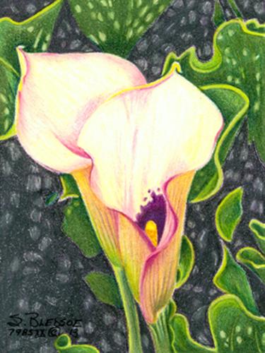 Palest Lilies