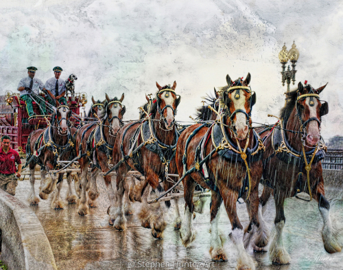 Clydesdale Rain