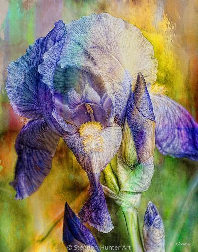 Iris Style