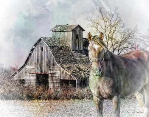 Horse granary