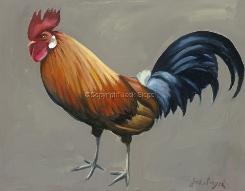 Kauai Cock