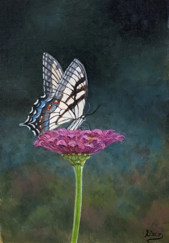 Buttlerfly and Flower by Gary Sisco