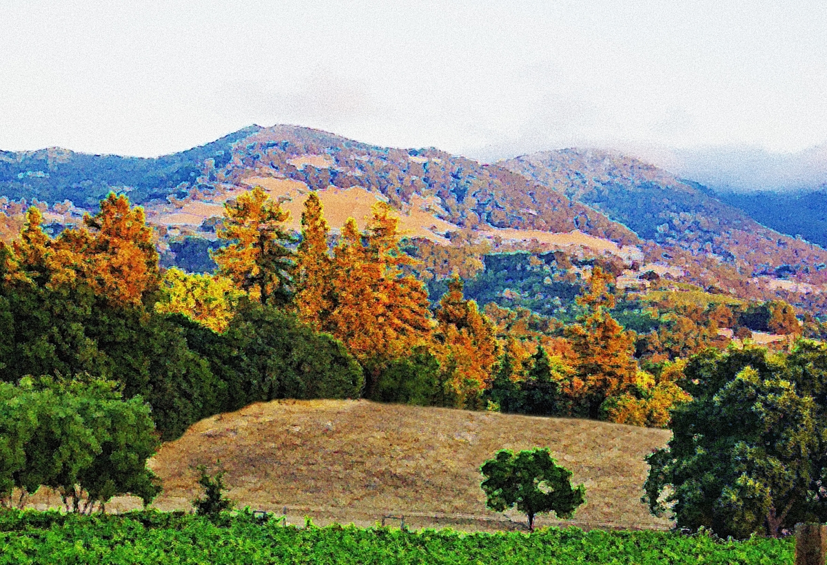 Napa Revisited (large view)