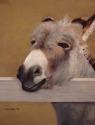 Donkey Ho-ti (thumbnail)