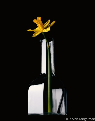 Daffodil in Decanter