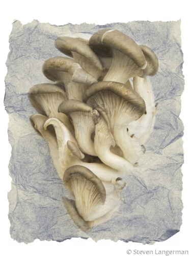 Mushrooms on crumpled paper