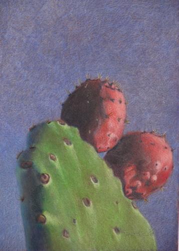 Prickly Pear Cactus #3
