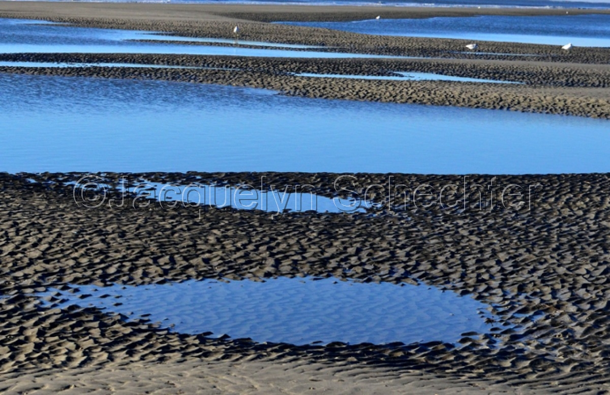 Early Morning Tidal Pools, Hilton Head Island S.C. (large view)