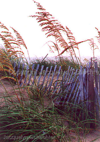 Sea Oats and Fence (large view)