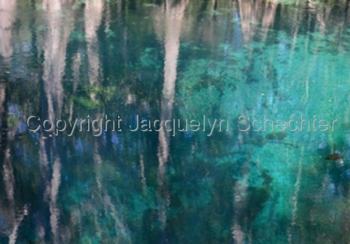 Cypress Reflections, Manatee Springs (large view)
