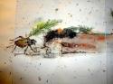 album of crickets  (thumbnail)