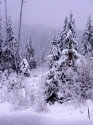 winter snow scene (thumbnail)