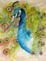 peacock perfect (thumbnail)