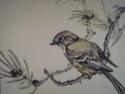 sparrow on pine (thumbnail)