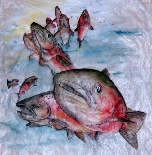 salmon swim