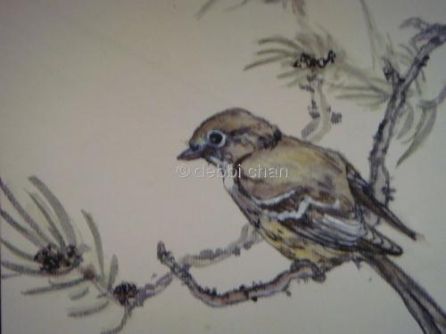sparrow on pine