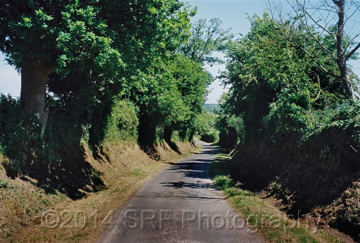 Hedgerows in Grainges (large view)