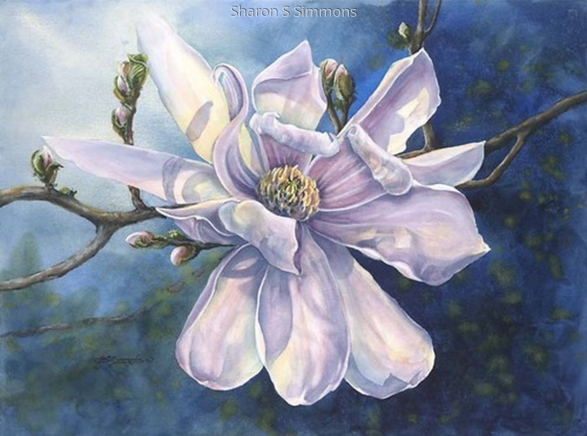 """Star Magnolia"" (large view)"