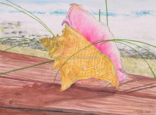 Bahama Conch