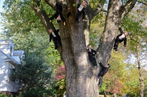 Charlie climbs a tree.
