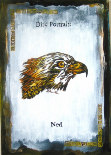 Bird portrait, Ned