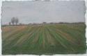 Oxfordshire Field #1