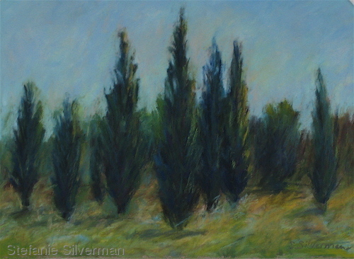 Provence Cypress Trees