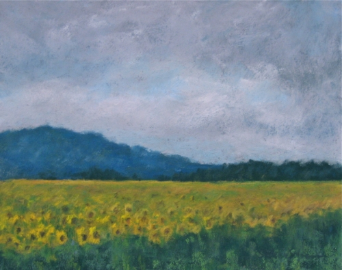 Tuscany Sunflowers 1
