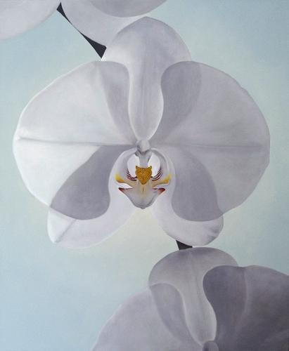 Phalaenopsis Four