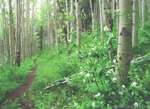 Aspen Trail, Early color
