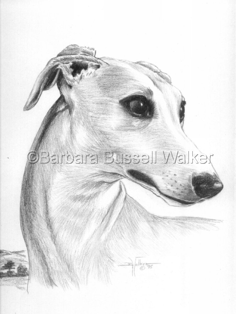 Head of a Whippet (large view)