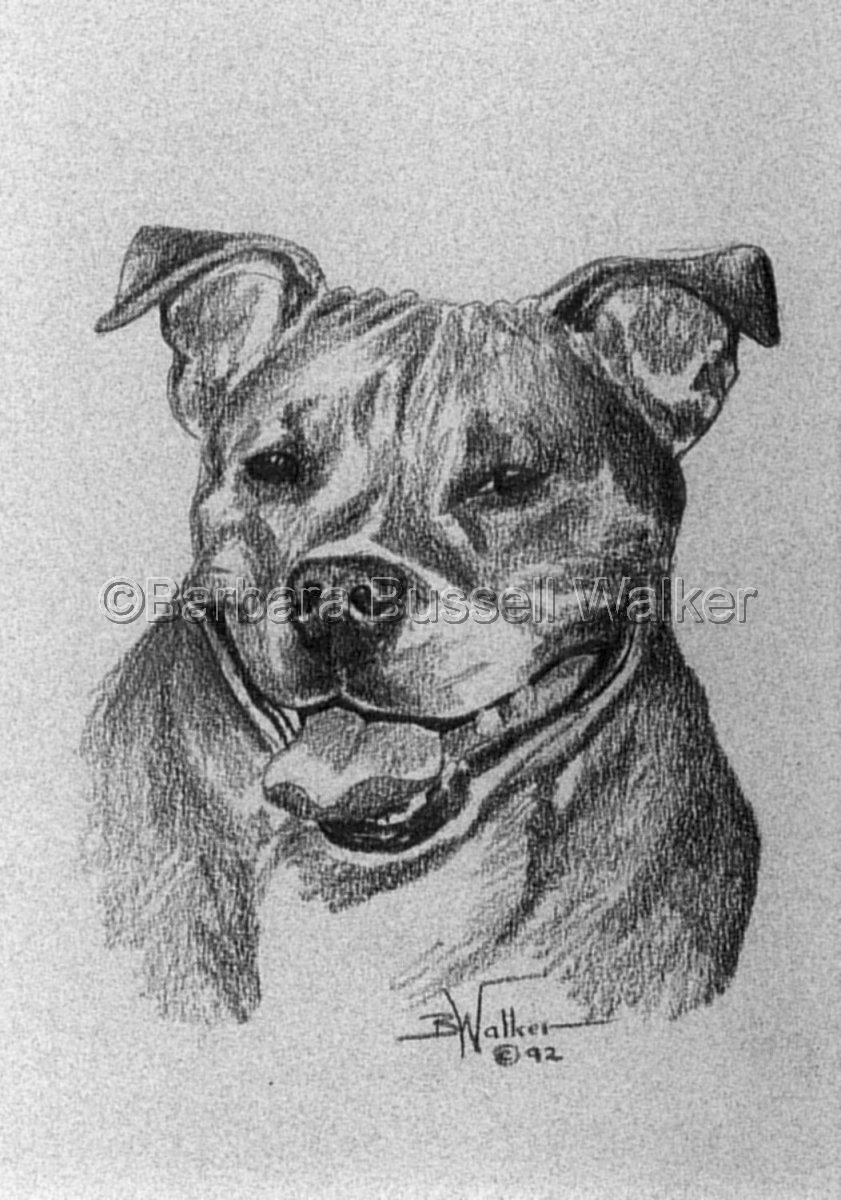 Staffordshire Bull Terrier (large view)