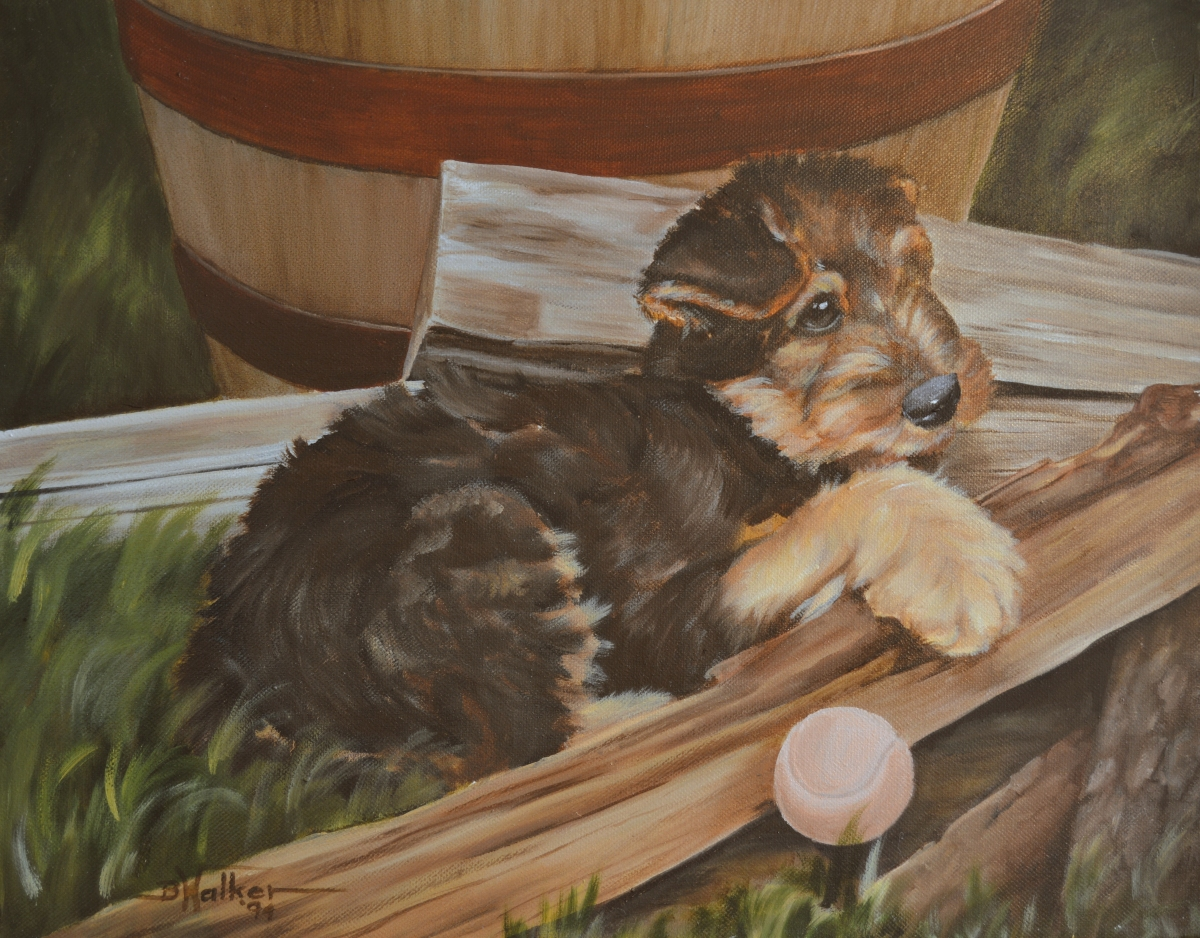Airedale Puppy Resting (large view)
