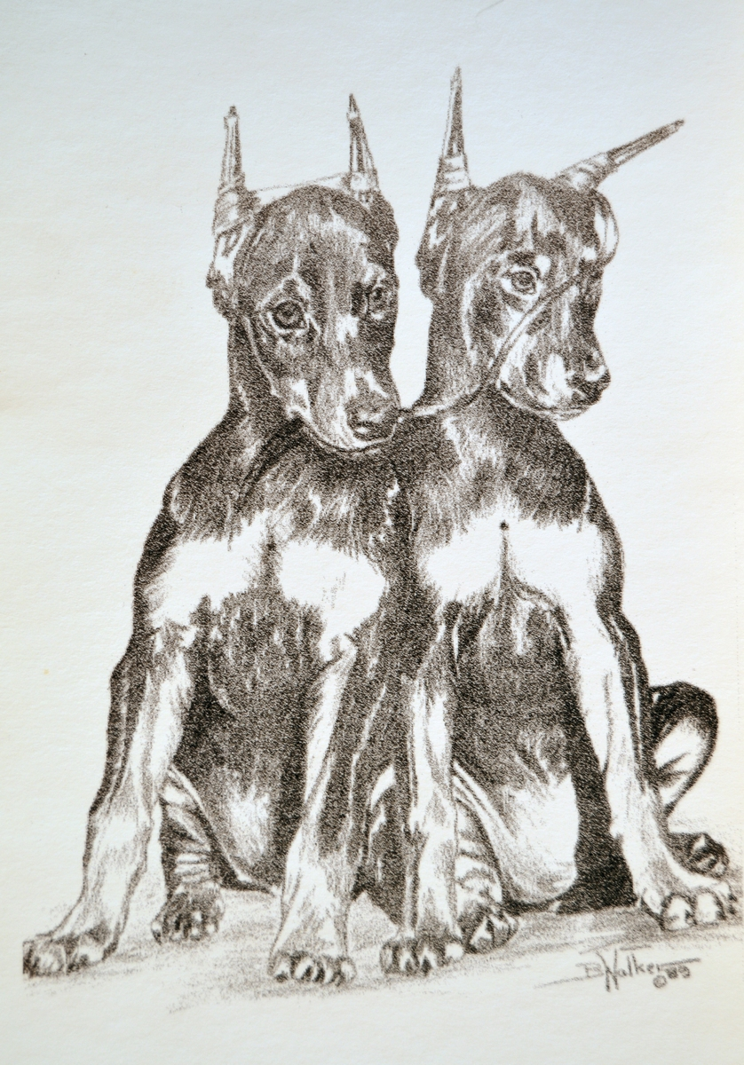 Bad Boys (Twin Doberman Puppies) (large view)