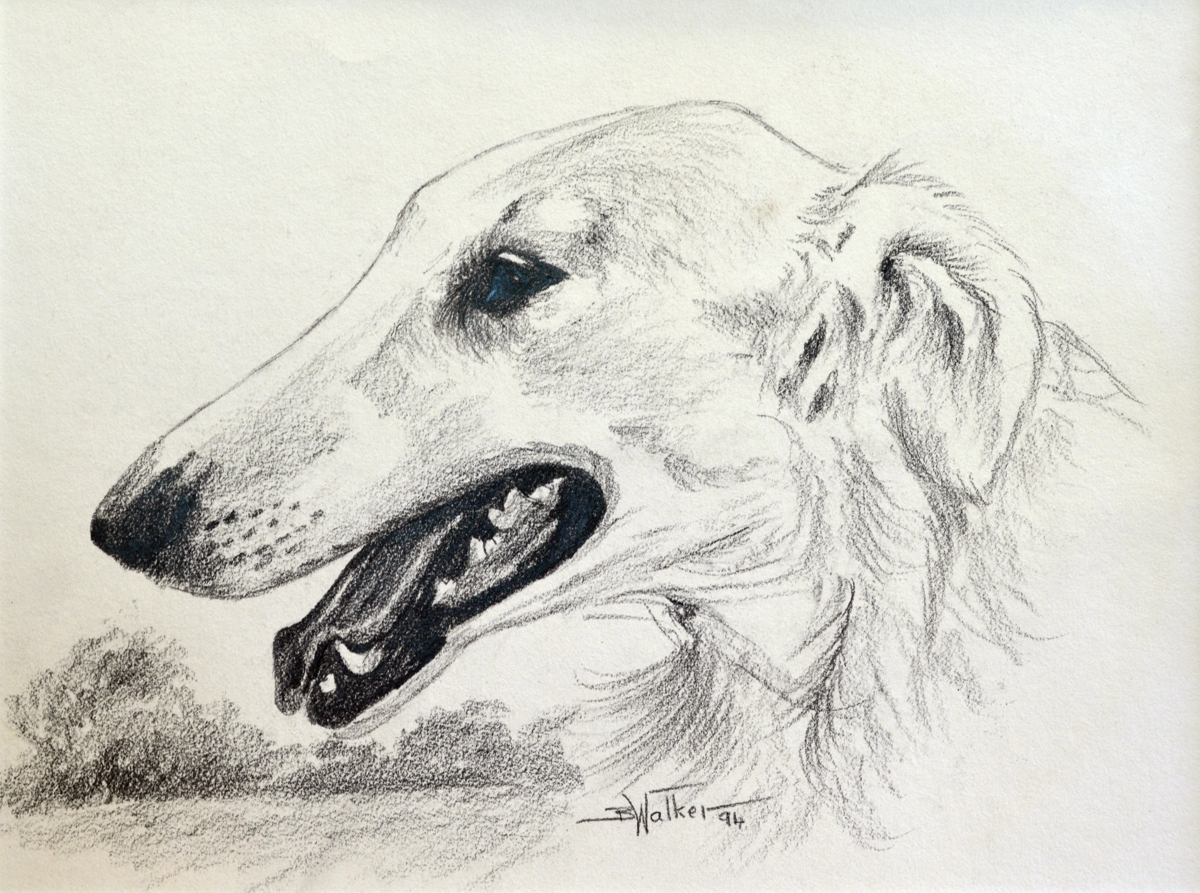 Borzoi  (large view)