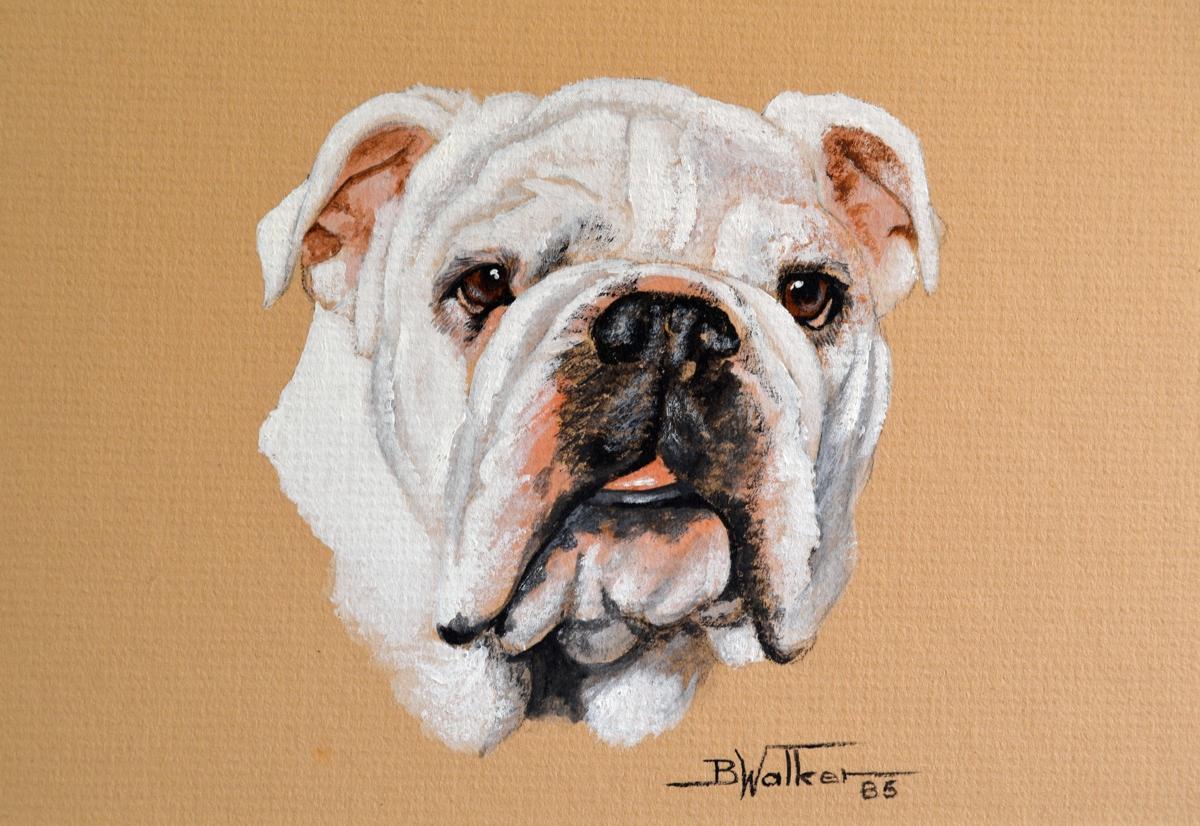 White Bulldog  (large view)