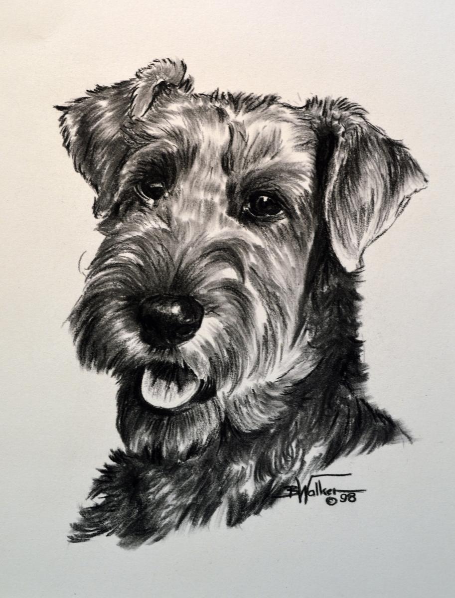 Irish Terrier (large view)