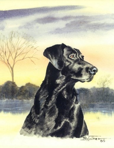 Black Labrador Alert (large view)