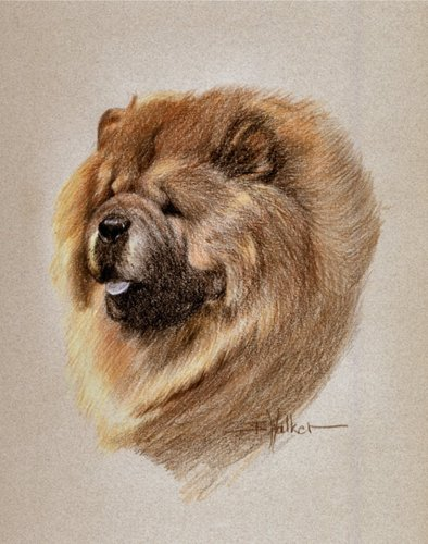 Chinese Chow Chow  (large view)