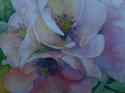 Blossoms (thumbnail)