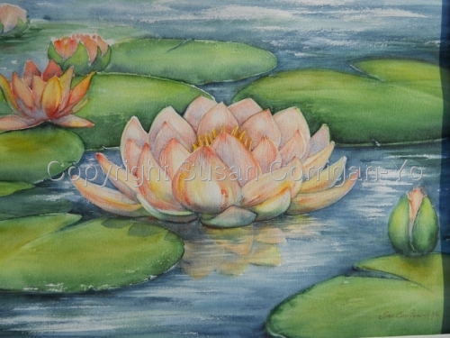Magnificent pink Waterlilies painted in watercolor media.  (large view)