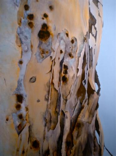 Eucalyptus/Arizona (Tree) (SOLD)