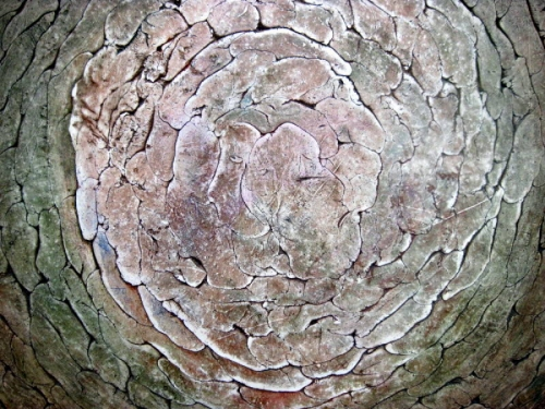 Ever widening circles (detail) (large view)