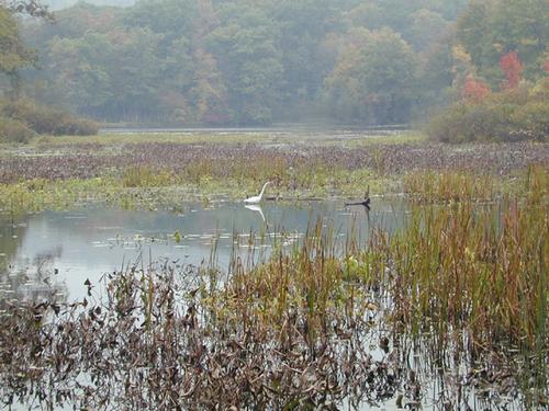 Lake Lackawanna II