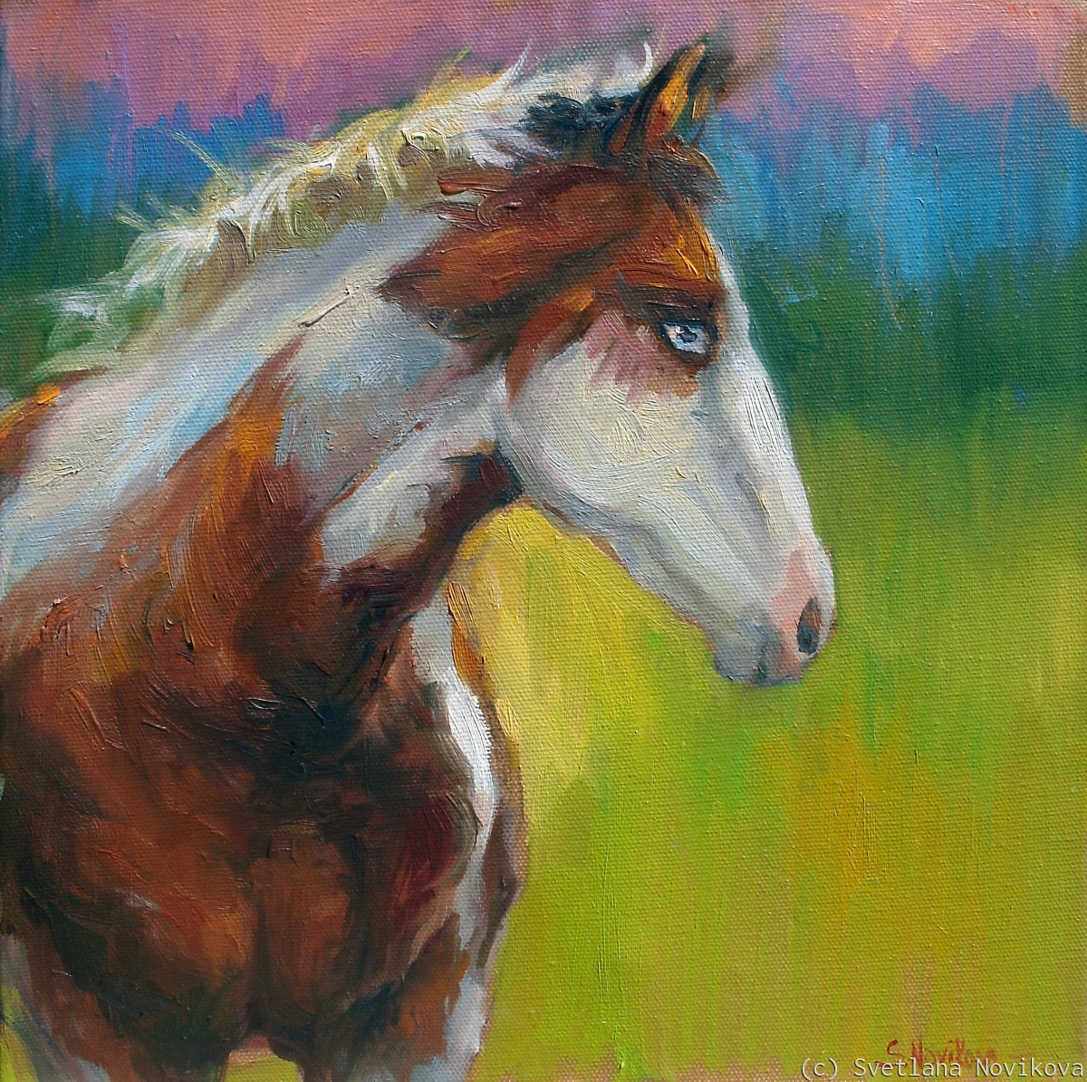 Contemporary Blue eyed Paint horse oil painting by Svetlana Novikova (large view)