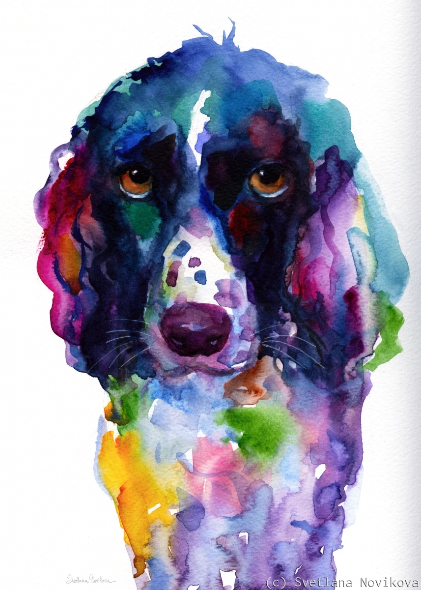 English Spring Spaniel Dog watercolor painting print (large view)