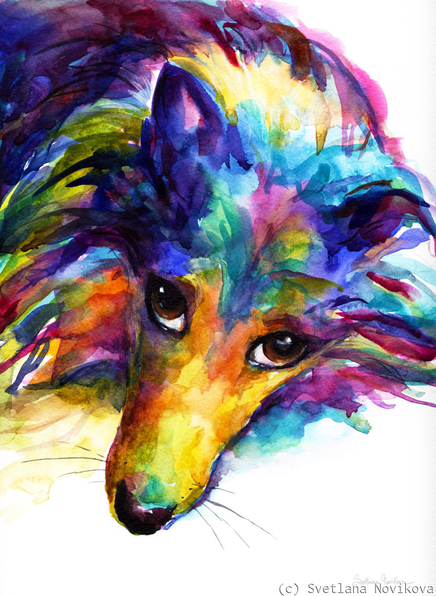 Cute Collie Sheltie Dog portrait in watercolors (large view)