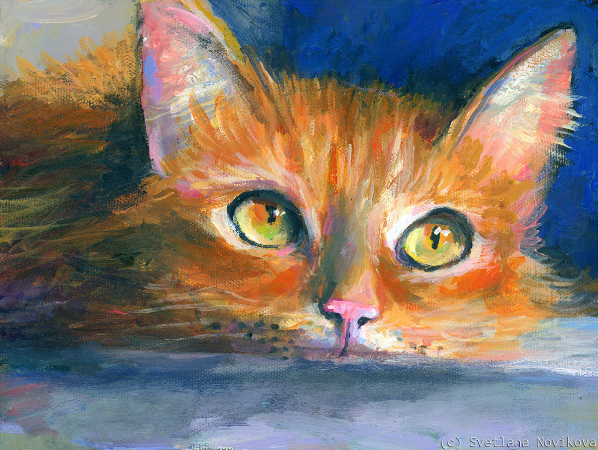 Orange Tubby Cat (large view)