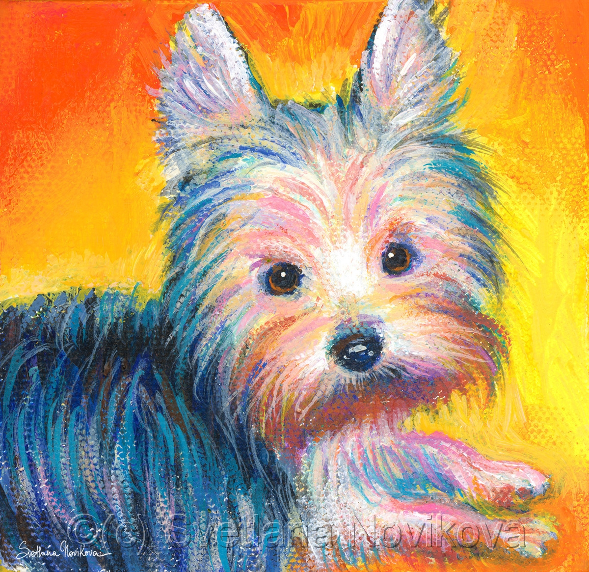 Yorkie puppy (large view)