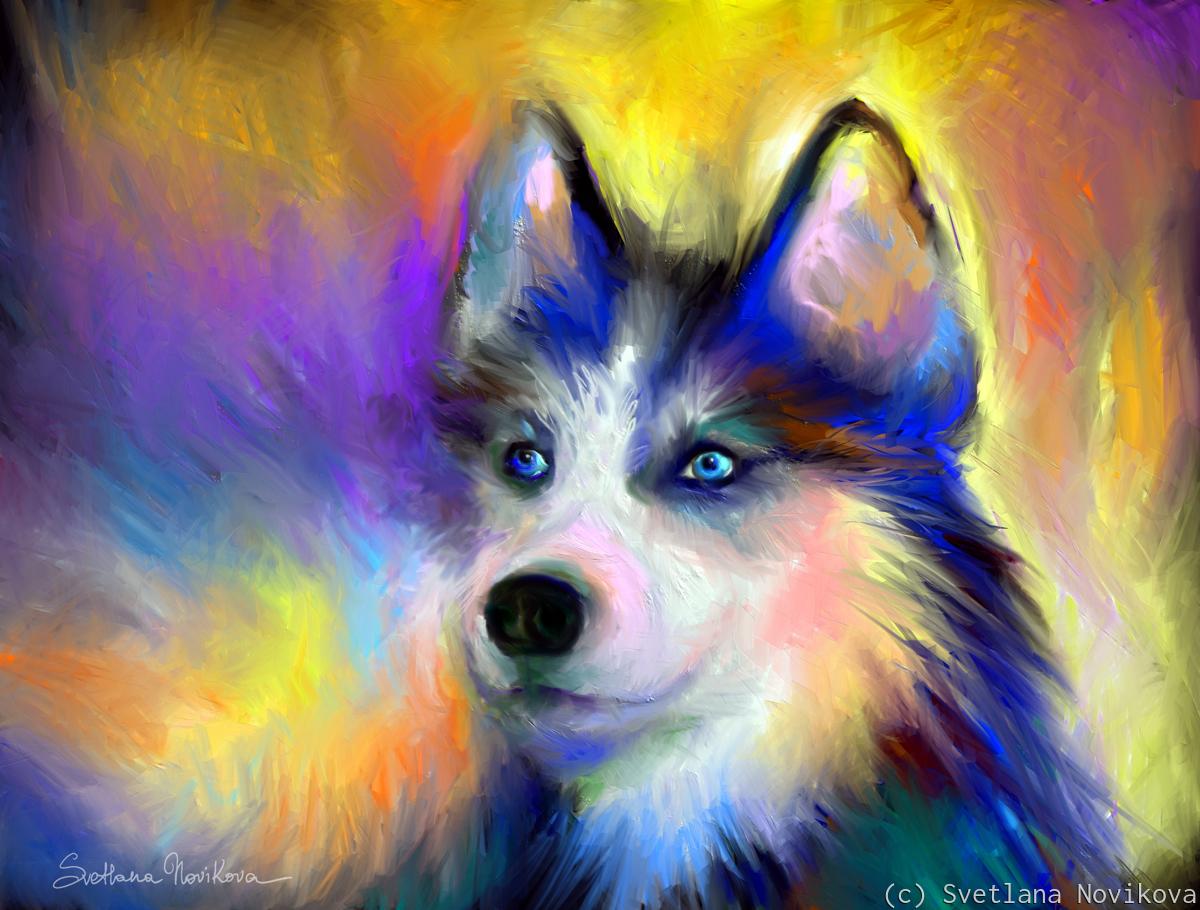 Siberian Husky Dog (large view)